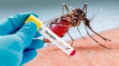 Dengue en Argentina: hay confirmados 748 casos hasta el 17 de este mes